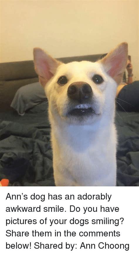 Smiling Dog Meme - 25 best memes about dog smiling dog smiling memes