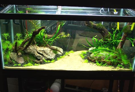 aquarium decoration ideas freshwater freshwater aquarium design ideas homestartx com
