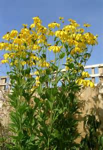Tall Flowering Plant - super natural landscapes tall perennial