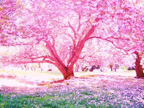 cherry tree anime cherry blossoms by loverlyness by kit artist on deviantart