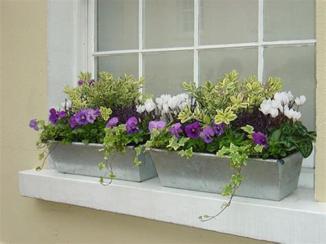 north window plants window boxes containers garden pinterest ガーデニング