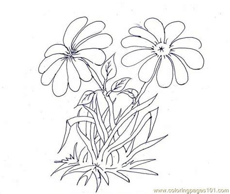 walnut tree coloring page free coloring pages of tree and flowers