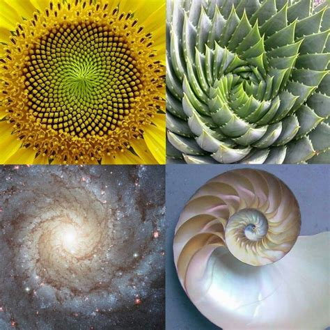 number pattern found in nature fibonacci sequence tattoo ideas pinterest