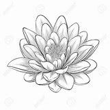 Lotus Flower Black And White Drawing | 1300 x 1300 jpeg 611kB