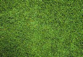vendita tappeti erbosi tappeti erbosi vivaio meraviglie della natura di