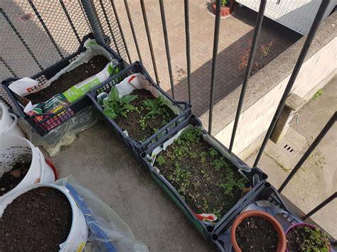 vasi orto balcone orto sul balcone con vasi di recupero scopri come farlo