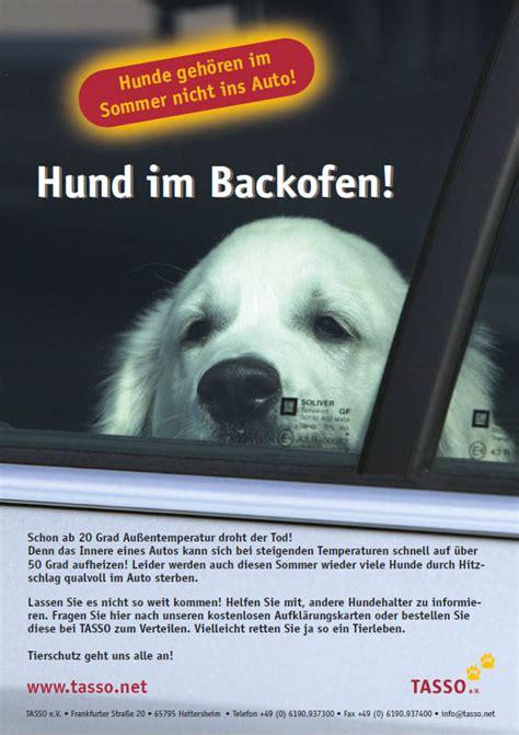 Hund Im Auto Hitze lebensgefahr f 252 r hunde in hei 223 en autos just for dogs