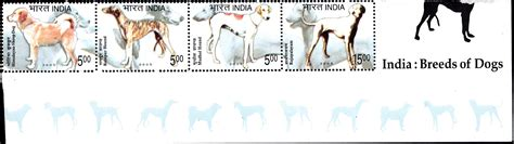 dogs india india breeds of dogs 2005