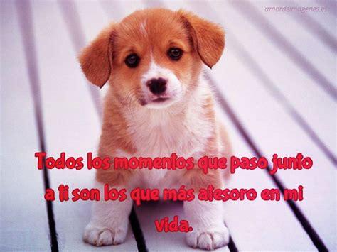 imagenes tiernas facebook frases de amor con imagenes de perros tiernos para