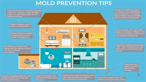 how to prevent mold in your home proven mold prevention