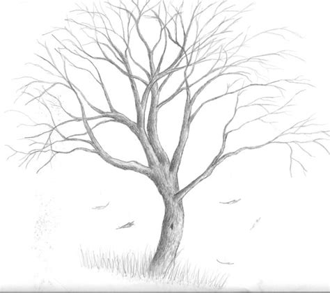 Y Tree Drawing by Stage Hep Illustrations Arbres Simples On