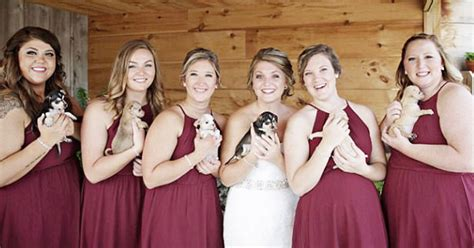 bridesmaids puppy bridesmaids carry rescue puppies the aisle instead of bouquets
