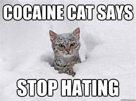 Cat Cocaine Meme - cocaine cat says stop hating cocaine cat quickmeme