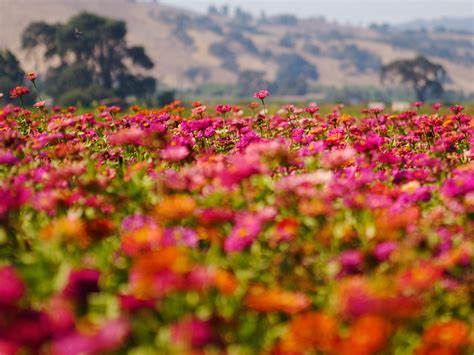 wallpaper flower scenery nature flowers image colorful flower field impressive