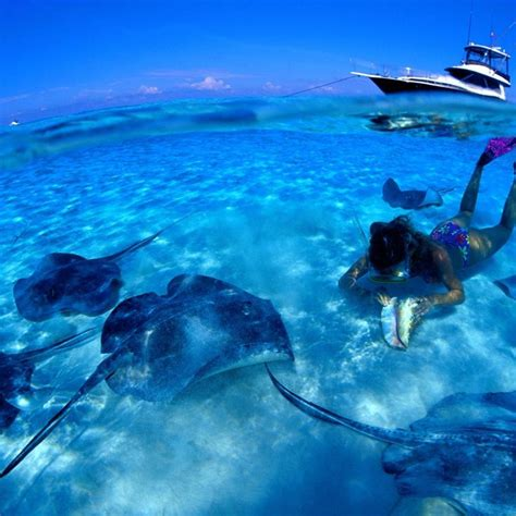cheap boat rental in key largo 17 best images about florida boating on pinterest