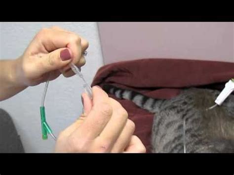 How To Prepare A Subcutaneous Sq Fluids Bag For Your Pet Funnydog Tv