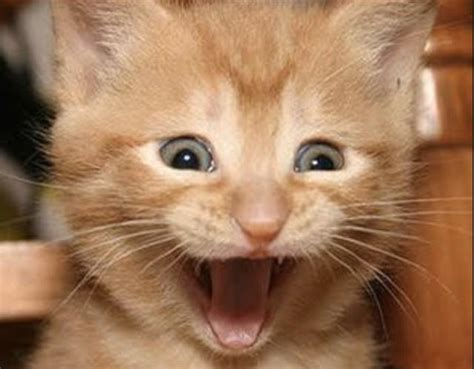 Happy Kitten Meme - meme creator happy cat meme generator at memecreator org