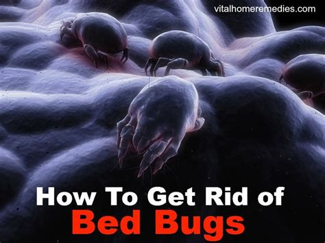 bed bugs how to get rid of how to get rid of bed bugs home remedies pinterest