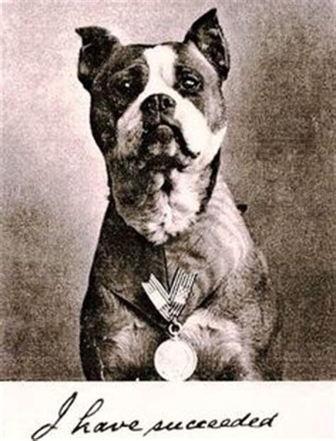 Sergeant Stubby Owner Sgt Stubby