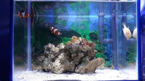 aquascape air laut mini aquarium ikan hias laut mini youtube