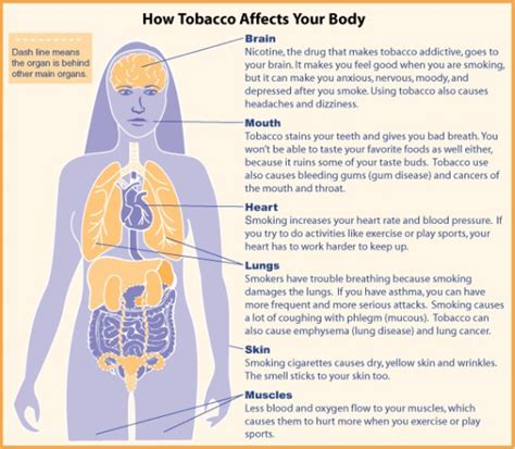 Does Tabacco Affect Thc Detox by Herbs To Help Quit The Way To Stop