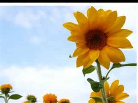 fiore biagio antonacci flores biagio antonacci fiore in spagnolo
