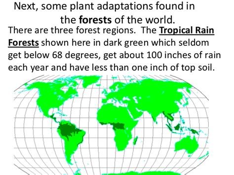 what are some plant adaptations in the tropical rainforest plant adaptationsteach