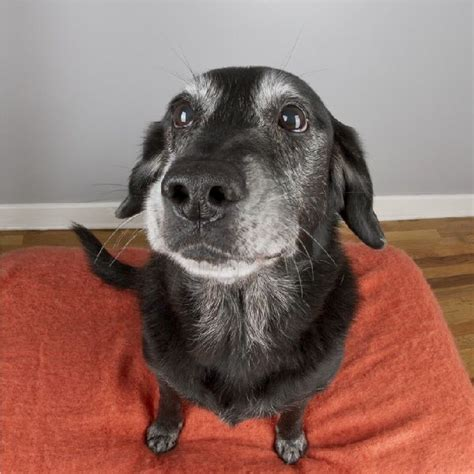 E Para Adocao From The Adoptable Pets Photo Pool by The House Adoptable Senior Dogs Photography