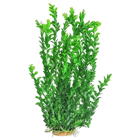 what kind of light for aquarium plants aquatop aquatop medium leaf aquarium plant light green