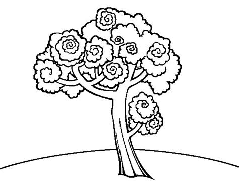 walnut tree coloring page free coloring pages of walnut