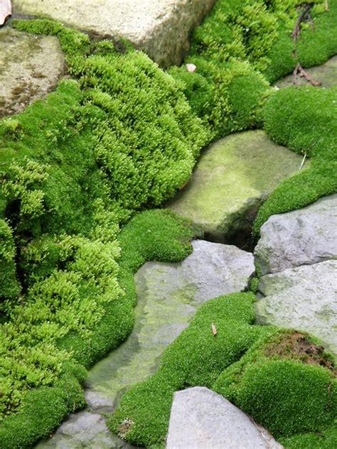 Moss Garden Ideas Backyard Moss Garden Www Imgkid The Image Kid Has It