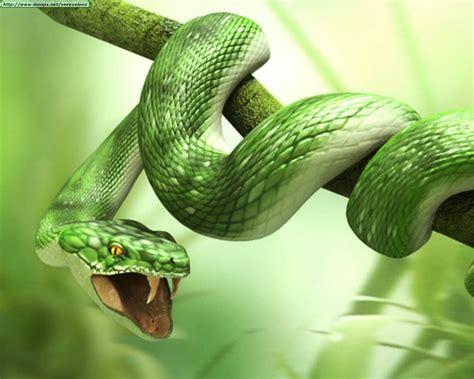 imagenes asombrosas de serpientes fotos de serpientes