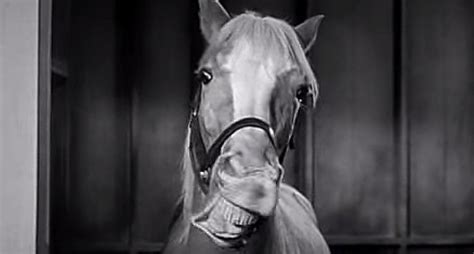 Mister Ed Het Sprekende Paard by Mr Ed The Talking Secrets That You