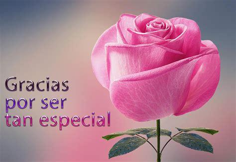 imagenes flores gracias banco de im 193 genes gracias por ser tan especial rosa con