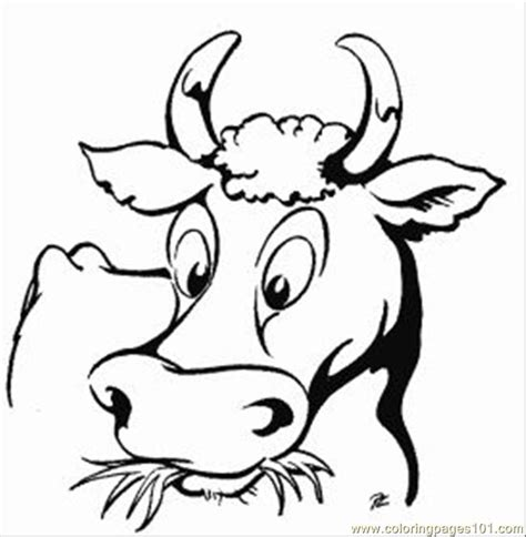 cow face coloring page coloring home