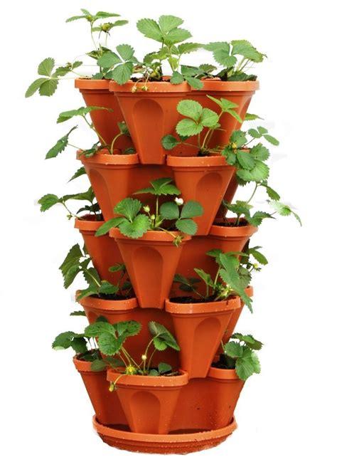 strawberry planter  strawberry planter