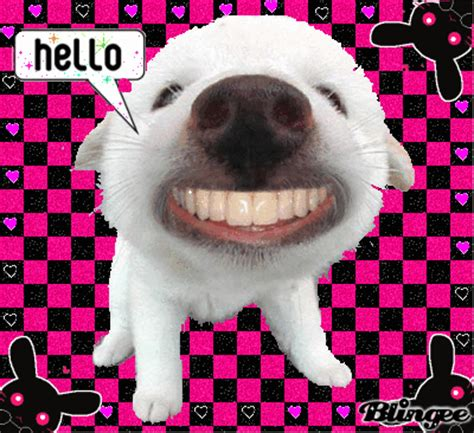hello puppy hello with big teeth picture 118971653 blingee