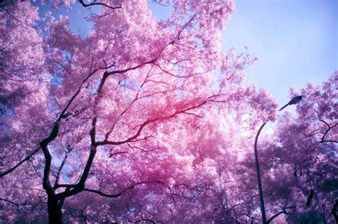 pink and purple tree tree with pink flowers in memes