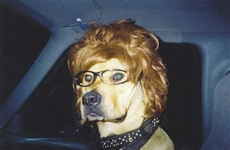 puppy with glasses with wig and glasses 1funny
