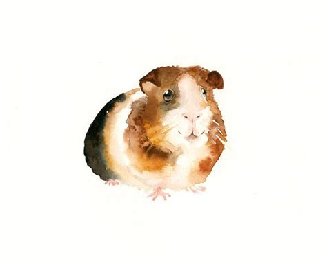 guinea pig 7x5inch art print animal watercolor print giclee