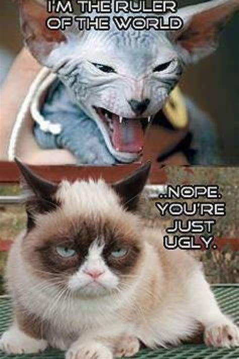 Hairless Cat Meme - grumpy cat on hairless cat grumpy cat pinterest cats