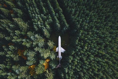 nature landscape airplane wreck forest trees drone