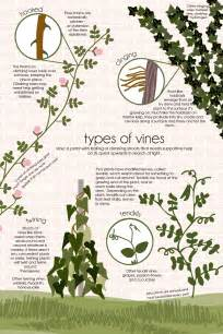 Kinds Of Types Of Vines Feed The Data