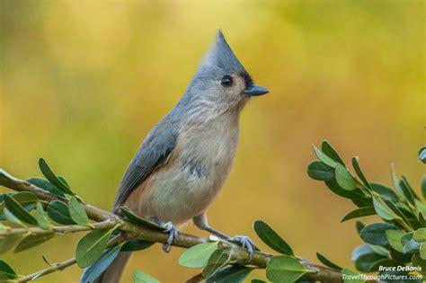 Backyard Bird Photography by Backyard Bird Photography And Color Balance