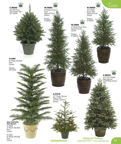 botanical trees tree types 1 landscaping pinterest small evergreen trees best 25 dwarf evergreen trees ideas