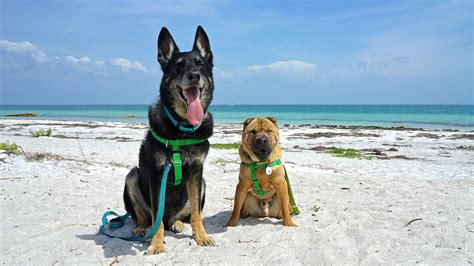 friendly beaches delaware florida s top pet friendly attraction fort de soto park and gopetfriendly