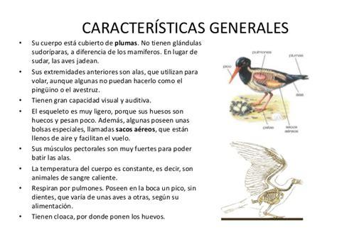 los pjaros mi primer 8408115502 las aves de mi colegio