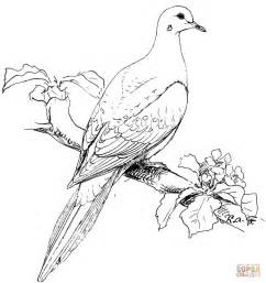 dove coloring page perched mourning dove coloring page free printable