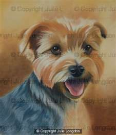 yorkie spots yorkie portraits on terrier yorkie and pet portraits