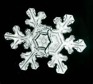 Snowflake Bentley Photos Snowflakes The Extraordinary Micro Photographs Of Winter